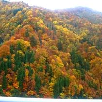 *【周辺】色鮮やかな自然の色彩!