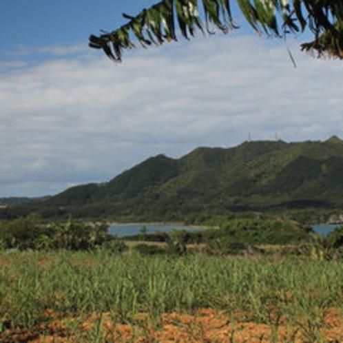 川平湾を見下す農園