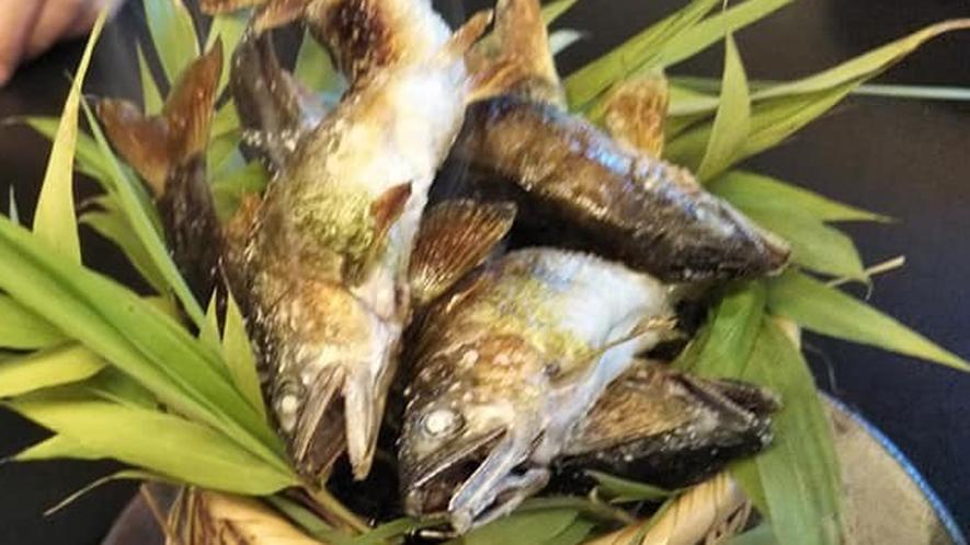 【鮎の塩焼き】今が旬!山口県の椹野川の活鮎