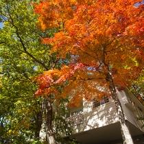 【秋の景色】