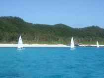 ヨットも島の風に流されて
