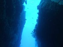 ケラマブルーの海へ