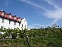 多治見修道院 ブドウ畑