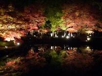 曽木公園の紅葉ライトアップ
