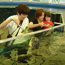 越前松島水族館(ウミガメ餌やり)