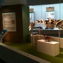 恐竜博物館 特別展例