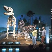 【周辺観光】恐竜博物館(当館より車で約50分)