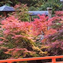 *当館周辺秋の風景。山々が美しく染まる秋の紅葉は絶景!(見頃:例年11月頃)