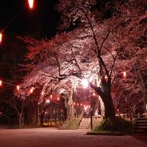 千秋公園 桜まつり