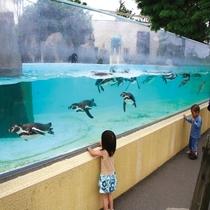 大森山動物園 ミルヴェ