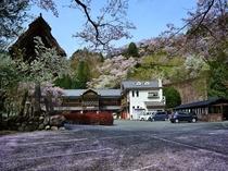 桜咲くふるさとの宿