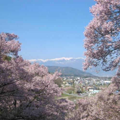 *【周辺観光】高遠の桜を見に行こう!