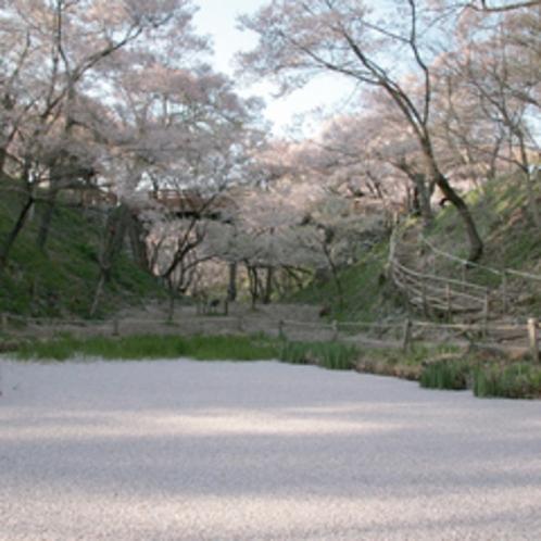 *【周辺観光】春満開!美しい桜を愛でる。