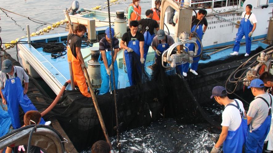 *四季折々に変化する若狭の海は魚貝類の宝庫!