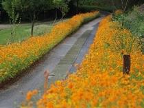 花の回廊♪