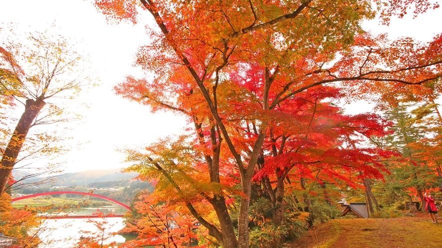 内田屋のすぐ上にある福満虚空蔵尊の紅葉は柳津を代表する紅葉スポット