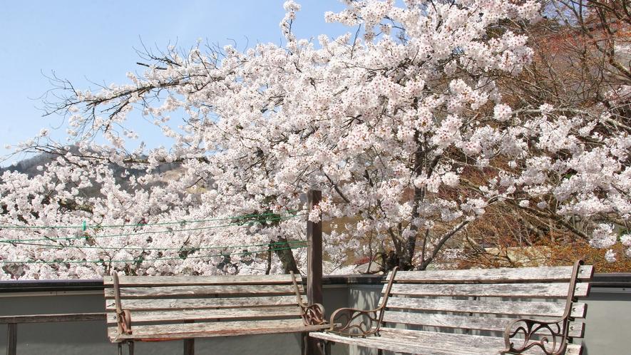 【桜の間】