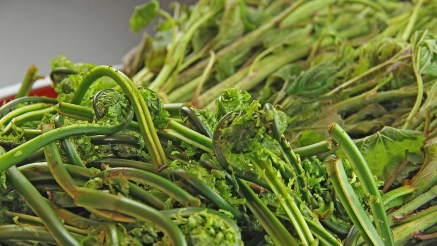 山菜は地元産!天ぷらや胡麻和えなど様々な調理法でお召し上がりください♪