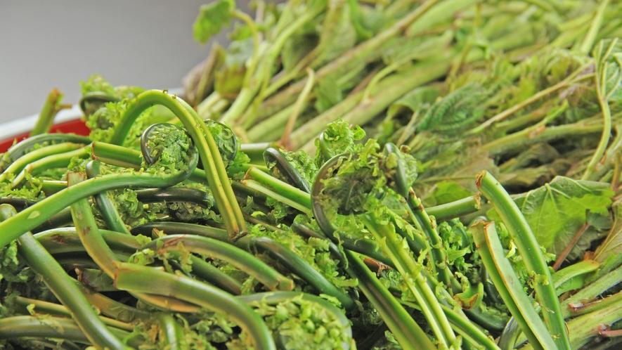 春は山菜がとっても美味♪フレッシュな山菜をお楽しみ頂けます!!