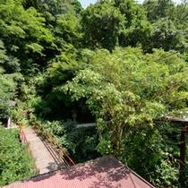 *お部屋からの景観/四季の移ろいが美しい山の彩り。心穏やかな気持ちに導いてくれます。