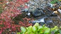 *河原の紅葉が散り始めたら本格的な冬の到来…