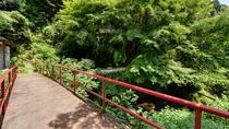 *こちらの橋を渡って露天風呂へ。自然の息吹を感じながら温かい湯船に浸かる贅沢なひと時を。