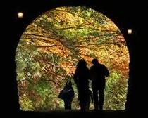 旧天城トンネル紅葉