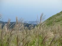 細野高原 すすき海まつり
