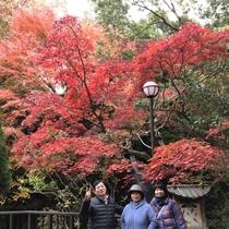 【万葉公園の紅葉】もみじが真っ赤になる紅葉の見ごろは、11月後半から12月にかけてになります