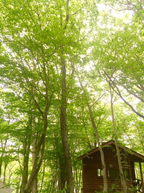 千貫石森林公園キャンプ場/バンガロー