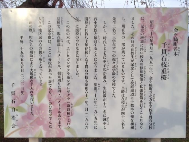 千貫石枝垂れ桜