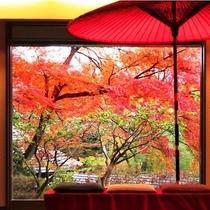 真っ赤に染まる紅葉と番傘