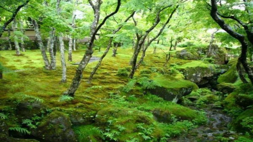 箱根美術館(苔庭)