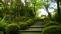 *≪東光院石段≫自然と調和し厳粛な雰囲気の中で静かに参拝ができます。