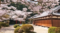 *【桜】地蔵院に咲く桜