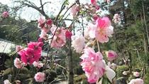*【源平枝垂桃】1年を通していろいろな種類の花を楽しめます。