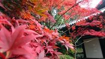 *11月中旬から下旬にかけて、境内の紅葉が鮮やかに色づきます