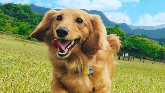 【ペットプラン★1泊〜】【室料20%OFF】愛犬と一緒♪優雅なニセコ旅を!<素泊>