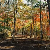 紅葉の美しい林
