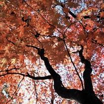 赤く染まった紅葉