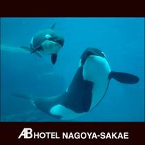 観光スポット:名古屋港水族館