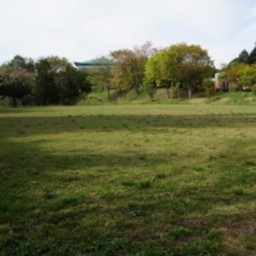 荒神山公園 芝生