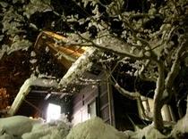 雪の花(26年1月10日撮影)