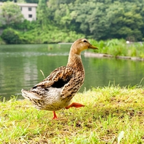 *【周辺】相模川沿いのコテージ♪可愛い生き物の姿も見られるかも…?