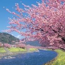 2月から3月にかけて行われる河津桜まつりは、お車で30分ほどの距離です。
