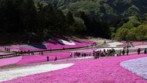 約17600㎡の広大な敷地に、9種類約40万株以上の芝桜
