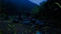 6月中旬から7月上旬、徒歩2分の高麗川で、ホタルを見られます。期間中はホタル観賞会を実施します。