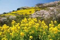 春のマザー牧場