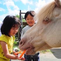 *マザー牧場/馬のエサやり体験