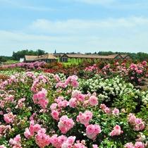 *東京ドイツ村/5月の見所はバラ!バラまつりも開催